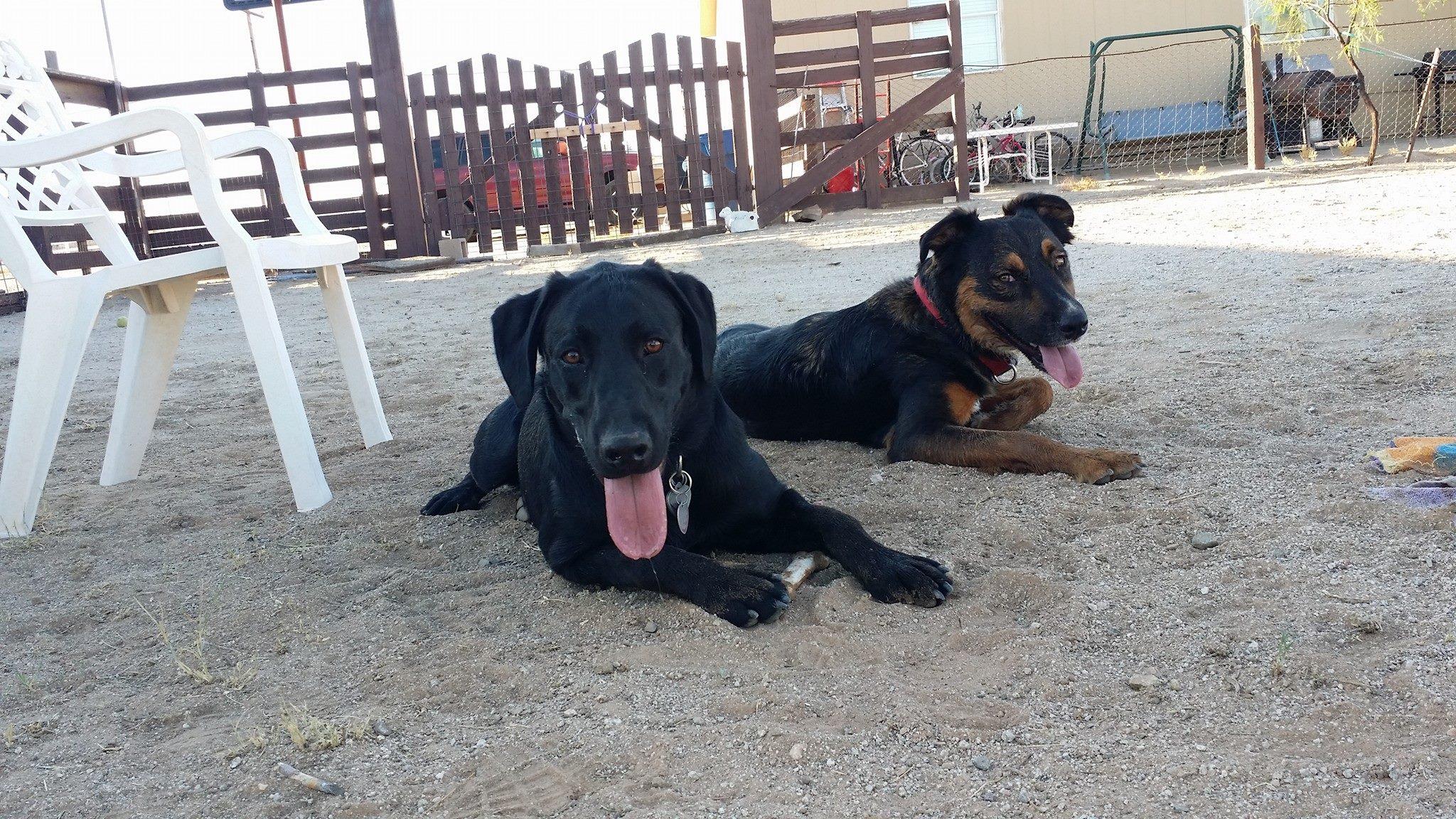 Diesel and George